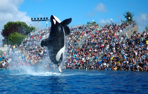 The big dope is going to kidnap Shamu